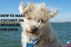 Is Fluffy's fur all tangled? Use this easy DIY tip to keep your dog's fur tangle-free!