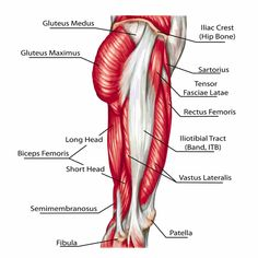 Muscles Of The Body Diagram For Kids . Muscles Of The Body Diagram For Kids Human Heart Diagram For Kids Luxury Diagram Human Bone Wonderful Leg Muscles Diagram, Muscle Diagram, Body Diagram, Body Chart, Hip Muscles Anatomy, Muscle Anatomy, Leg Anatomy, Iliotibial Band Stretches, Human Heart Diagram