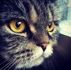 ラブリー-KittyCats、silvertonguesdaughter:キューティー猫<3