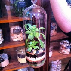 Succulents Love the new glassware at Oddyssea :)
