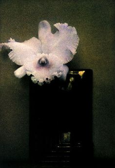 $10,000 SHEILA METZNER COLOR FRESSON PHOTOGRAPH MONDRIAN ORCHID L'ORCHIDEE 1982