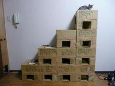 Cat box playground