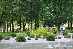 Zielonym do góry... - strona 6 - Forum ogrodnicze - Ogrodowisko