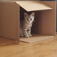 """@diva.diego: """"My humans bought me al kinds of beds and toys. They obviously didn't know know that all it takes is a cardbord box.""""   If you like to be featured please add me as a friend on Facebook (the link is at my bio description) and send me the best pics of your#cator#kittenon my inbox.   #cutecatskittens #love #cats #instacat #instacats #catstagram  #cats_of_instagram #catsofinstagram #meow #animals #animal #pet #pets #cute #cutecat #kittens #lovecats #instaphoto #awesome #picoftheday…"""