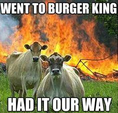 Cow Power! LOL!