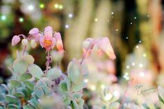 Photos, Pictures, Plants, Plant, Grimm, Planets