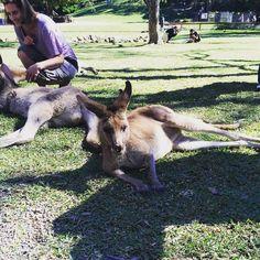 Super drained & how i wish i'm a kangaroo  . . #mondayblues #kangaroo #currumbinwildlifesanctuary #currumbin #wildlife #tb #throwback #animal by jul.julia_ http://ift.tt/1X9mXhV