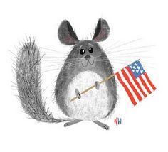 Patriotic American Chinchilla Sketch