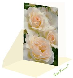 Diese Rosenkarte eignet sich zu verschiedenen Anlässen, da sie ohne Text ist. Meditation, Flowers, Plants, Joie De Vivre, Card Wedding, Birth, Florals, Planters, Flower