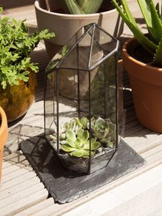 Das Urban Jungle-Haus für kleine Gartenpflanzen. #pflanzenfreude