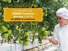 Los incentivos del PROAGRO productivo favorecen a más de un millón de productores. SAGARPA SAGARPAMX