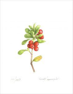 Little cranberries