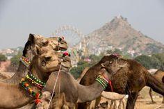 Pushkar Camel Fair. - Cultura Exclusive/Michael Truelove/Getty Images