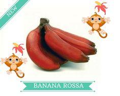 Novità della settimana! Banane Rosse direttamente dall'ecuador! http://www.neartoyou.it/product_detail/400
