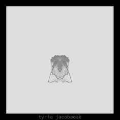 tyria jacobaeae .insecta collection #generativeart made with #processing.
