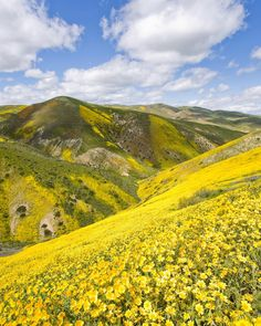 Carrizo Plain National Monument, California - by Matt