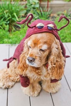When I decided to spend Halloween in Los Angeles over New York, I had one major motivation. Yes, memories of cold, rainy nights in a damp costume Cute Dog Halloween Costumes, Rainy Night, Cutest Dogs, Your Dog, Cute Animals, Holidays, Pets, Friends, Pretty Animals