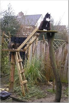Out door cat tree :D my cat would like this