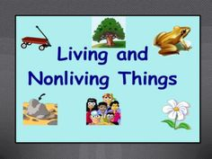 What are some nonliving things in the rainforest?
