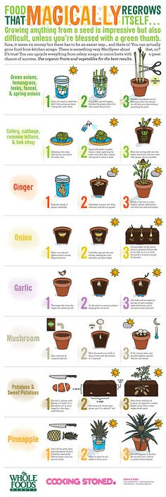 Food That Re-Grows From Kitchen Scraps Garden Plants, Vegetable Garden, Herb Garden Indoor, Indoor Herbs, Indoor Window Plants, Herb Plants, Mason Jar Herb Garden, Balcony Garden, Tower Garden