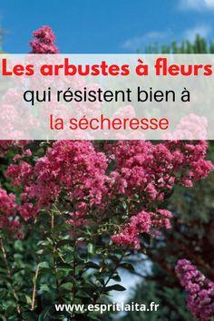 18 arbustes pour un jardin fleuri même pendant ou après une période de sécheresse. Le climat évolue au nord de la Loire et on ne peut plus se permettre de planter des hortensias partout. J'ai donc cherché des arbustes qui me permettent d'avoir des fleurs au jardin, surtout en été, sans être obligée de les arroser pour qu'ils survivent. A lire sur le Blog 😊
