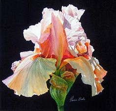 Peach Iris by Tanis Bula 2nd Place CWS Award of Excellence Sponsored By: Winsor…