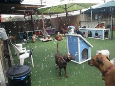 Now thats a doggie daycare, Frek Yes! BUBBLE MACHINE IT!