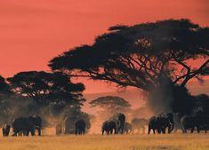 At the end of the day on the plains of Africa - Imgur
