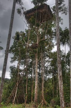 korowai-tree-house-1