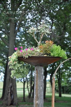 natural garden design with stumpery yard decorations. Some brilliant ideas here. Garden Yard Ideas, Garden Trees, Garden Crafts, Garden Projects, Garden Pots, Diy Projects, Natural Landscaping, Backyard Landscaping, Tree Stump Decor