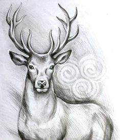 ORIGINAL deer art stag pencil drawing graphite home decor illustration animal art gift wall decor narteck on etsy Cool Pencil Drawings, Pencil Drawings Of Animals, Pencil Sketch Drawing, Pencil Drawing Tutorials, Animal Sketches, Art Drawings Sketches, Drawing Base, Drawing Ideas, Drawing Animals