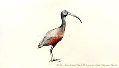 Michela Gastaldi l'ibis, 2016