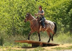 Extreme Trail Horse Obstacles