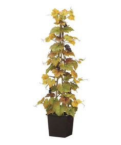 Another great find on #zulily! Grape Ivy Arrangement #zulilyfinds