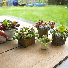 mini planters....I sooo want to do this.
