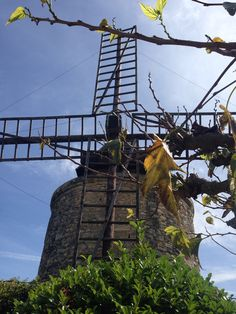 Windmill in the Louberon