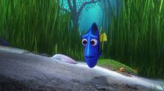 Screencap Gallery for Finding Dory Bluray, Disney, Pixar). Dory is a wide-eyed, blue tang fish who suffers from memory loss every 10 seconds or so. Disney Finding Dory, Finding Nemo, Disney Pixar, Idris Elba Movies, Trailer Peliculas, The Ellen Show, Mini Games, Popular Movies, Disney Animation