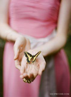 Butterfly, butterfly...