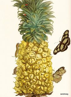 Banana and Pineapple with Butterfly