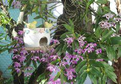 casinha de pássaros e  orquidea dendrobium
