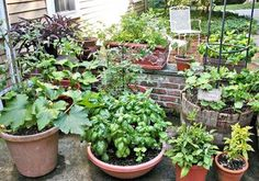 Container Vegetable Gardening Tips.
