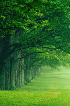 super Ideas for nature green forest beauty Beautiful World, Beautiful Places, Beautiful Scenery, Tree Forest, Amazing Nature, Belle Photo, Beautiful Landscapes, Beautiful Nature Photography, Feather Photography