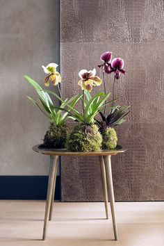 Image result for ikebana with primula