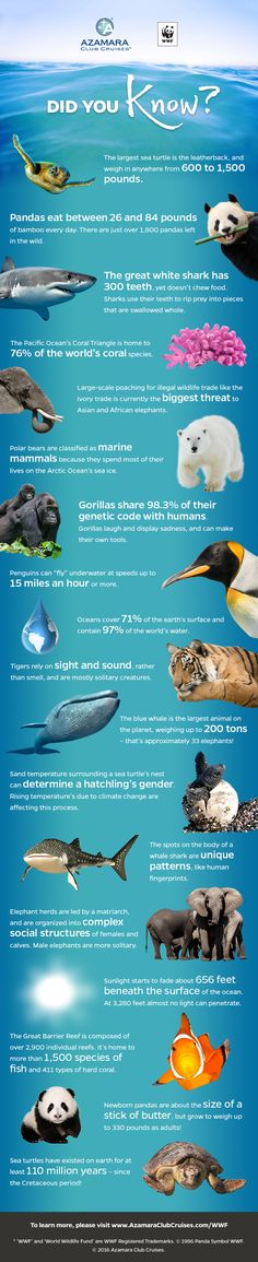 Check out this infographic of fascinating facts about animals around the world!