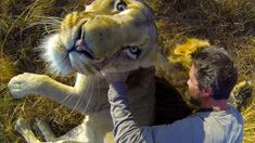 Do not do this at home! Kevin Richardson the Lionhearted snuggles with lions | The Rainforest Site Blog