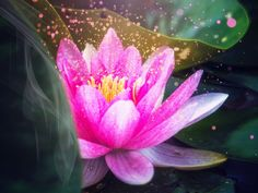 """""""""""The real us is pure love, pure light."""" (Don Miguel Ruiz, The Four Agreements) Spiritual Path, Spiritual Awakening, Sutra Du Lotus, Position Du Lotus, What Is Spirituality, The Four Agreements, 3rd Eye, Living At Home, Holistic Healing"""