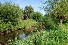 Wildes Erpeufer - Wanderung durch das #Erpetal bei #Berlin Berlin, Country Roads, Journey, Plants, Blog, Hiking, Lawn And Garden, The Journey, Blogging