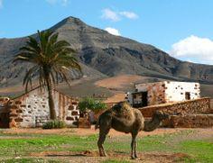 Barranco del Mudo. Tiscamanita.  Isla de Fuerteventura