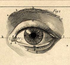Paul Bert, L'Année préparatoire d'enseignement scientifique, 1887.