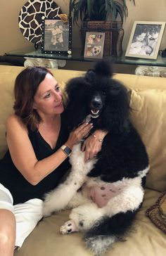 DuBois Standard Poodles - Home Tiny Puppies, Kittens And Puppies, Teddy Bear Poodle, Haircut Tip, Poodle Haircut, Poodle Grooming, Teeth Health, Standard Poodles, Tina Turner